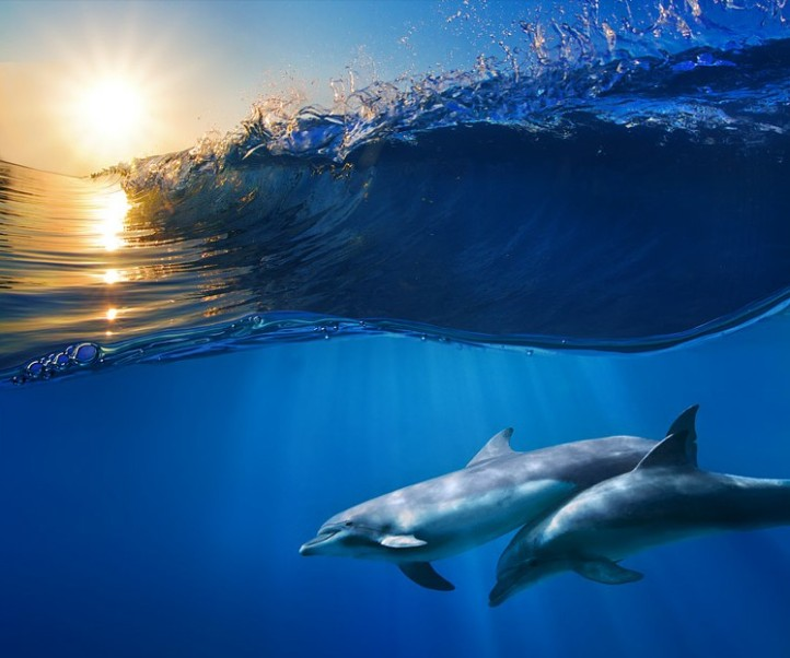 two_beautiful_dolphins_under_wave_by_vitaly_sokol-d63cvos_1.jpg